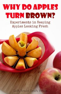 Learn why apples turn brown and do a fun and educational experiment on ways to keep apples looking fresh. From Left Brain Craft Brain.