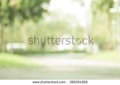 Woods Abstract Stock Photos, Images, & Pictures   Shutterstock