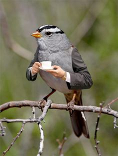 English robin, via http://kottke.org/12/06/birds-with-arms