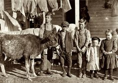 Family Plan: November 1908. Chester, South Carolina. Wylie Mill. Boy with calf is Pamento Benson. Raising it for beef. Has worked in mill 2 years. Mr. Benson said, Just as soon as the boys get old enough to handle a plow, we go straight back to the farm. Factory is no place for boys. Next to Pamento is Ray Benson, helper in the mill. Next Clarence Rost, works in mill. Photo by Lewis Wickes Hine.