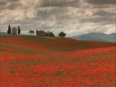 Wild flowers in Tuscany