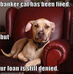 Banker cat has been fired.
