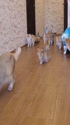 Funny Animal Videos, Funny Animals, Cat Gif, Dog Cat, Corgi, Twitter, Cute, Gifs, Corgis