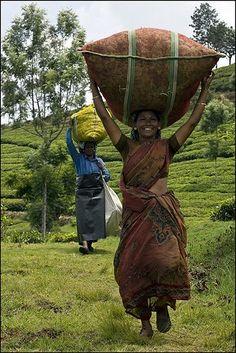 Tea collection, India