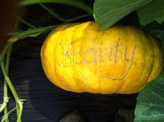 Pumpkin decorating by scarring