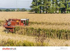 Biskupice Radlowskie, Poland - October 2, 2015: Red Combine Harvester During Harvesting Corn (Maize) Stock Photo 326163461 : Shutterstock