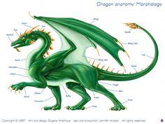 Dragon Anatomy: Morphology * Dragon Fantasy Myth Mythical Mystical Legend Dragons Wings Sword Sorcery Art Magic Drache dragon drago dragon Дракон  drak dragão