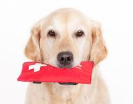 Kit de primeiros socorros.  Tenha sempre por perto medicamentos e materiais básicos que podem salvar a vida de seu animal.
