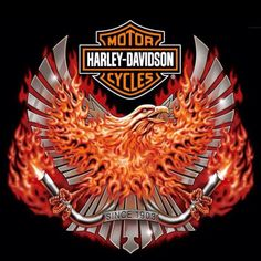 Harley Davidson Events Is for All Harley Davidson Events Happening All Over The world Harley Tattoos, Harley Davidson Tattoos, Harley Davidson Helmets, Harley Davidson Posters, Motor Harley Davidson Cycles, Harley Davidson Street, Harley Davidson Motorcycles, Vintage Motorcycles, Harley Davidson Pictures