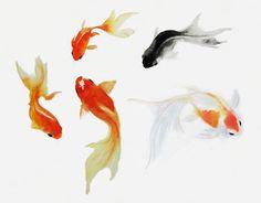 Five Swimming Goldfish in Watercolor. Watercolor Art by iwakoshi. www.SweetPeaAndGummyBear.etsy.com
