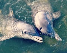 Author, Mary Alice Monroe recommends places to go in the Charleston, SC lowcountry area All About Dolphins, Charleston Beaches, Charleston Sc, Low Country, Marine Life, Beautiful Creatures, South Carolina, Places To Visit, Wildlife
