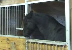 Hogyan tűnnek el állandóan a lovak a lovardából? Durván ügyes a kis tök:D