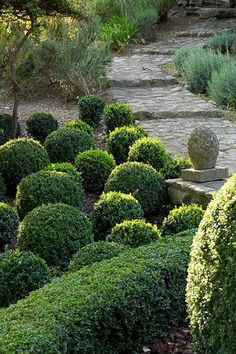 boxwood and path