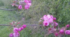 La Multi Ani, romanilor pentru Duminica Floriilor