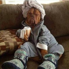 PetsLady's Pick: Funny Relaxed Dog Of The Day  ... see more at PetsLady.com ... The FUN site for Animal Lovers