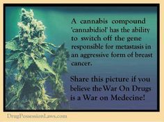 A cannabis compound 'cannabidoil' shuts off the cancer gene and causes it to destroy itself. It's called autophagy. The government has known this for decades but chemo & radiation are better money-makers. Look it up, spread the word & save lives! Cannabis Cures Cancer, Medical Cannabis, Cancer Cure, War On Drugs, Marijuana Plants, Natural Healing, Breast Cancer, The Cure