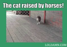 I Present You: The Prancing Cat! I guess this cat was actually raised by horses! HAHAHA!