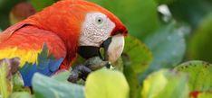 photo of a from Fulton, Beautiful Birds, Costa Rica, Animals, Animales, Animaux, Animal, Animais
