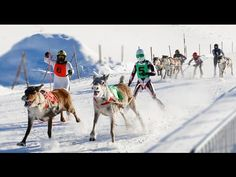 Reindeer+Races+in+Rovaniemi+area+in+Lapland