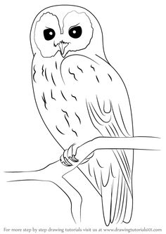 Learn How to Draw a Tawny Owl (Owls) Step by Step : Drawing Tutorials