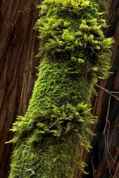 Muir Woods National Monument, California by Ray Rasmussen