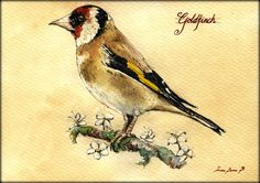 "Goldfinch European Carduelis carduelis bird nature study wildlife color animal 8x5"" 21x15 cm art original Watercolor painting by Juan bosco"
