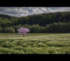 Appletree in the Ruhr Area, Germany | Apfelbaum im Ruhrgebiet, Deutschland | MARCO POLO User Photofreaks