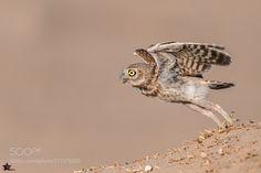 Take off (NiStar PS / Dubai / United Arab Emirates) #nikon D5 #animals #photo #nature