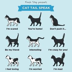 meaning of cat tail movements  swishing a swishing tail i