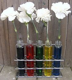 Carnation science experiment- shows that plants drink water