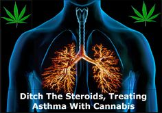 How Cannabis Treats Asthma Better Then Any Drugs Studies show that cannabinoids found in the marijuana plant actually protect your lungs and relieve the constriction and discomfort of asthma. It is estimated that one out of twelve people Full Article