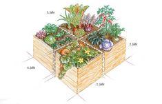 Mischkultur: Gemüsebeete mit reicher Ernte - Trend Hochbeet: Tipps fürs Anlegen & die Gemüseaufzucht