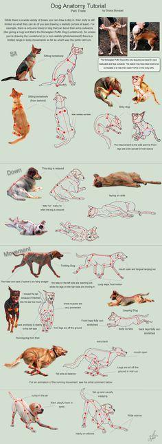 Dog Anatomy Tutorial 3 by ~SleepingDeadGirl on deviantART
