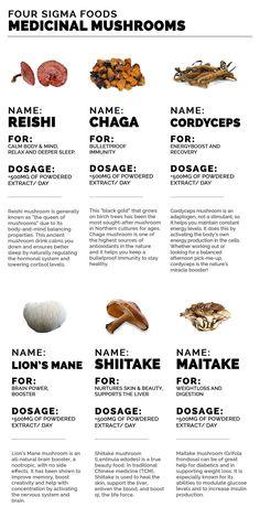 22 Magical Mushroom Recipes – Keto & Medicinal Mushrooms Handy Guide to the Healing Power of Medicinal Mushrooms Healing Herbs, Medicinal Herbs, Natural Medicine, Herbal Medicine, Natural Cures, Natural Healing, Keto, Paleo, Herbal Remedies