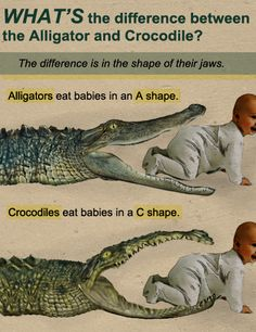 Easy way to tell the difference between an Alligator and a Crocodile.