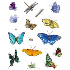 Butterflies & Insects- Removable Wall Designs