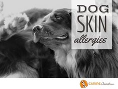 Skin Allergy Symptoms, Dog Skin Allergies, Food Allergies, Dog Food Delivery, Dog Nutrition, Veterinary Care, Purebred Dogs, Guide Dog, Home Remedies