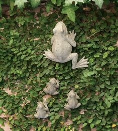 Mother Frog and her three babies are shown climbing a fig-covered wall.
