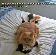 """That awkward moment when you realize your roommate has """"company""""..."""