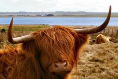 Routard.com : toutes les informations pour préparer votre voyage Écosse. Carte Écosse, formalité, météo, activités, itinéraire, photos Écosse, hôtel Écosse, séjour, actualité, tourisme, vidéos Écosse