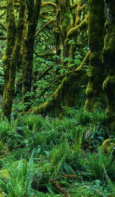 Rain Forest - NZ