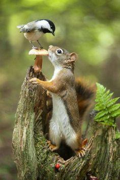 Travel Discover Nature Mushroom bird and squirrel. Nature Mushroom bird and squirrel. Nature Animals Animals And Pets Baby Animals Funny Animals Cute Animals Wild Animals Garden Animals Small Animals Forest Animals Nature Animals, Animals And Pets, Garden Animals, Small Animals, Forest Animals, Animals Photos, Wildlife Nature, Beautiful Birds, Animals Beautiful