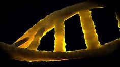 Algunos cánceres son errores en el 'corrector' del ADN
