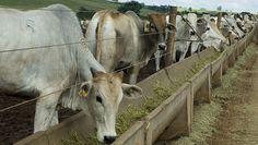Fazenda inteligente: zootecnia de precisão permite agregar valor à produção