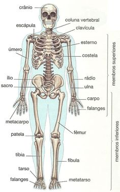 Ossos do Corpo Humano Medicine Notes, Medicine Student, Human Body Anatomy, Human Anatomy And Physiology, Study Organization, Medical Anatomy, Medical Terminology, School Motivation, School Notes
