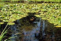 Park Seleger Moor, czyli czy warto zapłacić za kontakt z naturą? Switzerland, Flora, Park, Photography, Painting, Photograph, Fotografie, Painting Art, Plants