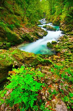 Radovna River, Vintgar Gorge, Bled, Slovenia Too pretty for words Beautiful Places To Visit, Beautiful World, Places To See, Beautiful Live, Peaceful Places, The Sky Is Everywhere, Bled Slovenia, Nature Scenes, Amazing Nature