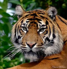 Cute Animals - Google+