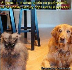 Котоматрица: Я, конечно, в котах особо не разбираюсь,  но по моему, Ваську пора нести в церковь!