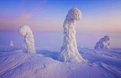 De buitenaards mooie sneeuwbomen van het Riisitunturi National Park in Fins Lapland. (foto: Niccolo Bonfadini)